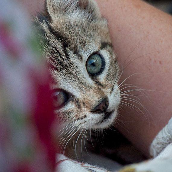 gatitos-crias-gatos-16