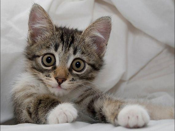 gatitos-crias-gatos-17