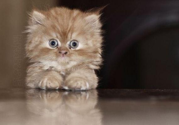 gatitos-crias-gatos-18