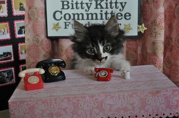 gatitos-crias-gatos-19