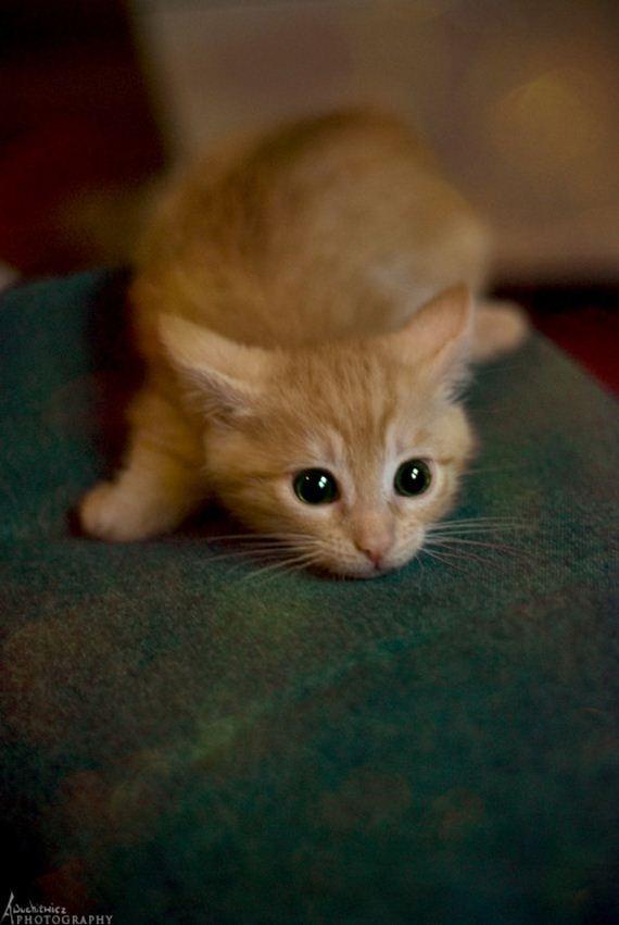 gatitos-crias-gatos-21