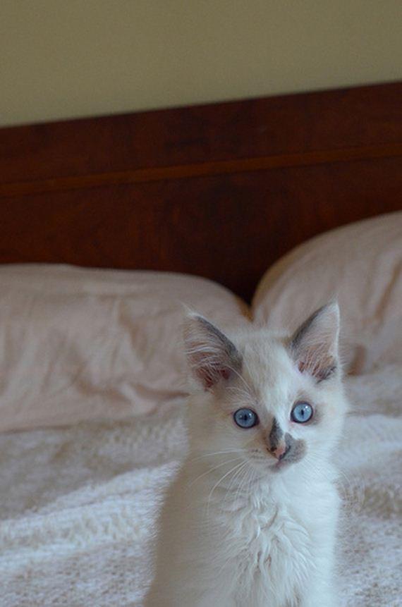 gatitos-crias-gatos-22