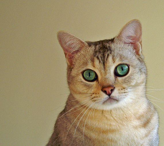 gatitos-crias-gatos-23