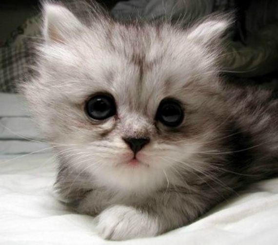 gatitos-crias-gatos-24