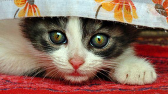gatitos-crias-gatos-25