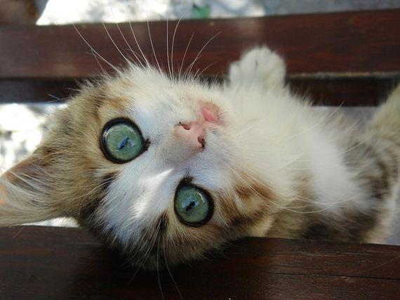 gatitos-crias-gatos-26