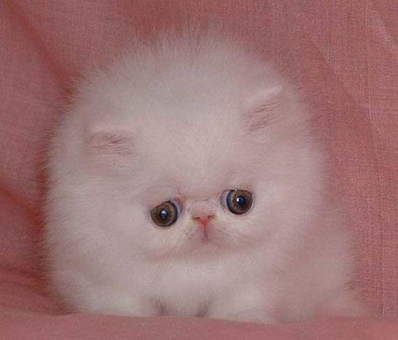 gatitos-crias-gatos-27