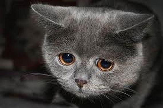 gatitos-crias-gatos-28