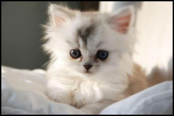 gatitos-crias-gatos-29
