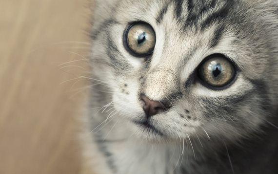 gatitos-crias-gatos-30