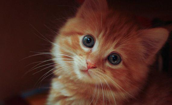 gatitos-crias-gatos-31