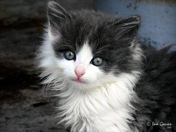 gatitos-crias-gatos-32