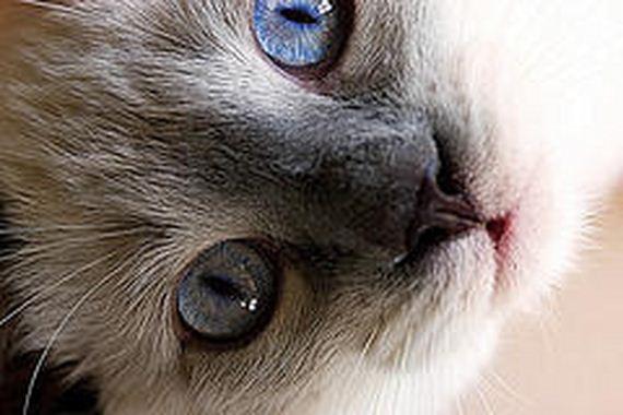 gatitos-crias-gatos-33
