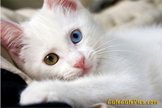 gatitos-crias-gatos-34