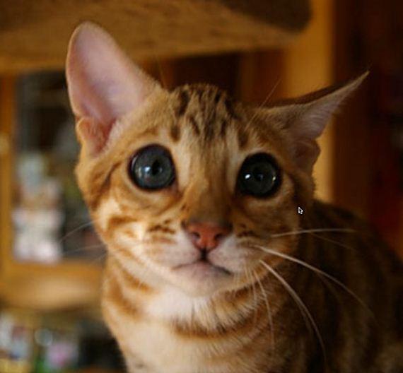 gatitos-crias-gatos-35