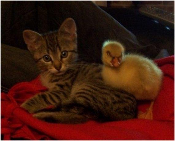 gatitos-crias-gatos-36