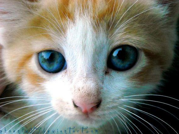 gatitos-crias-gatos-37