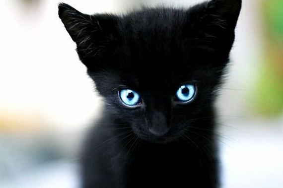 gatitos-crias-gatos-38