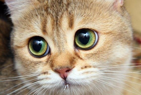 gatitos-crias-gatos-39