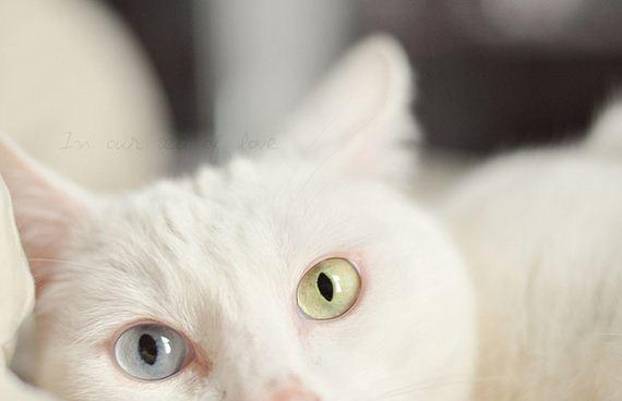 gatitos-crias-gatos-40