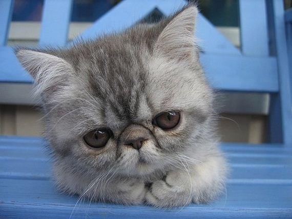 gatitos-crias-gatos-41