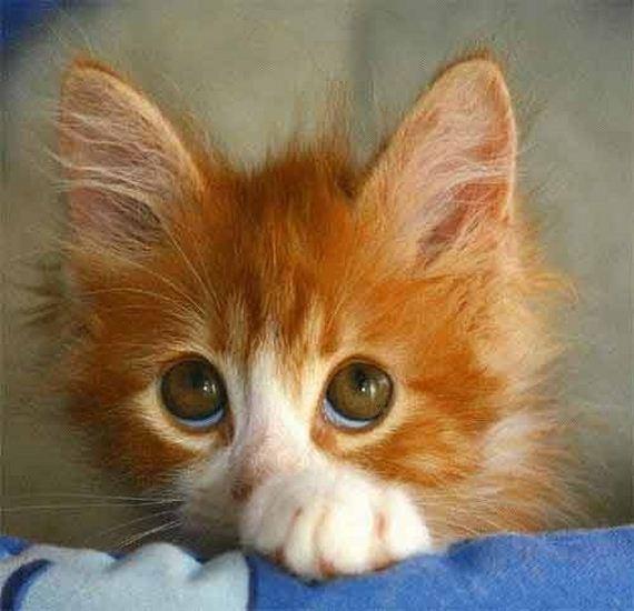 gatitos-crias-gatos-42
