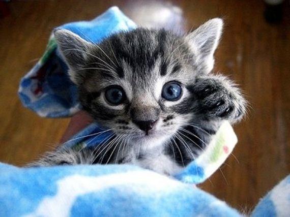 gatitos-crias-gatos-43