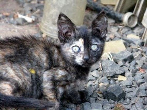 gatitos-crias-gatos-44