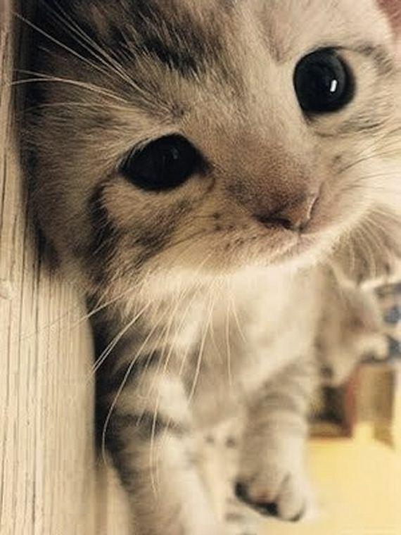 gatitos-crias-gatos-45