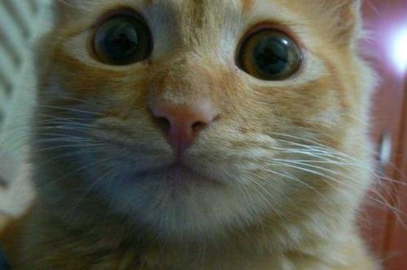 gatitos-crias-gatos-46
