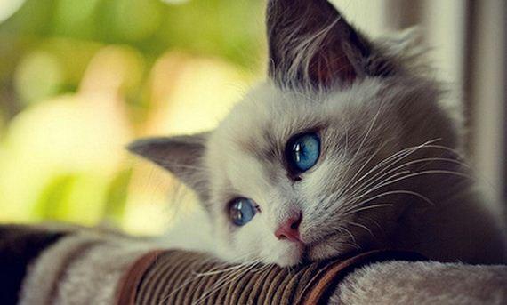 gatitos-crias-gatos-47