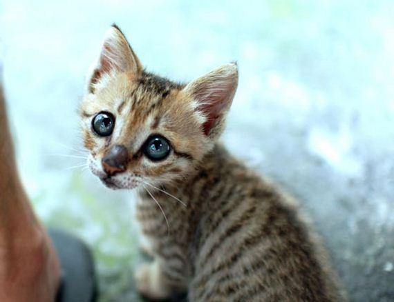 gatitos-crias-gatos-49