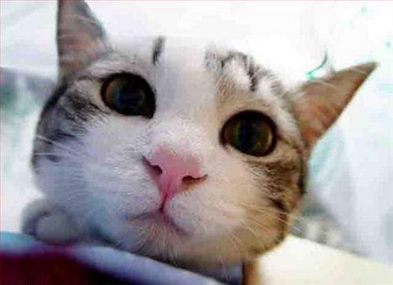 gatitos-crias-gatos-50