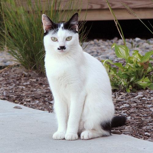 gato-bigote-1