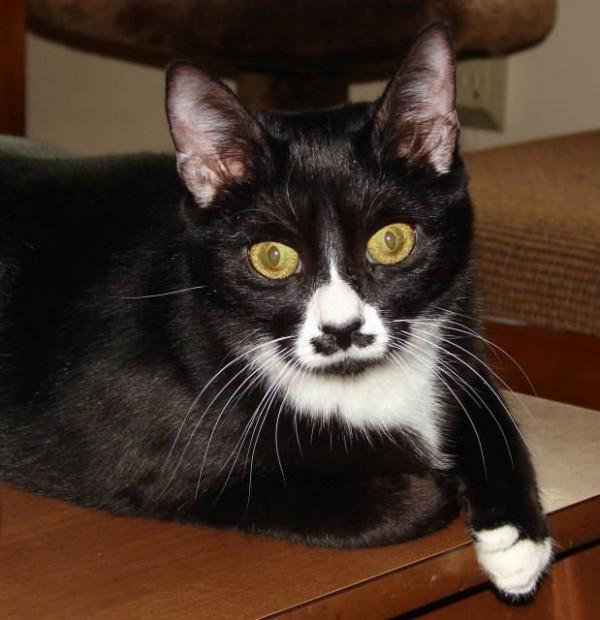 gato-bigote-3