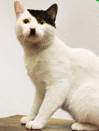 gato-bigote-4