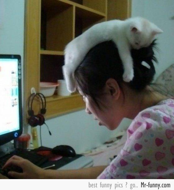 gato-chica