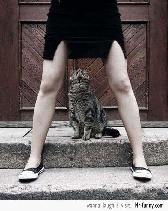 gato-miron-f