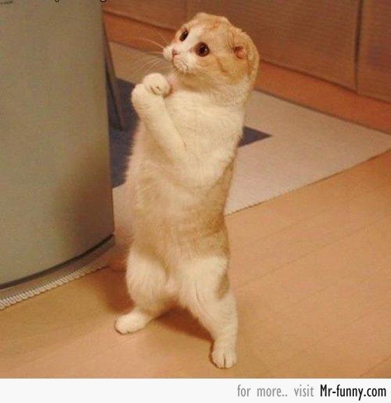 gato-rezando