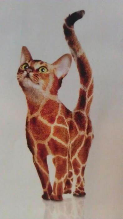 gato-tigre