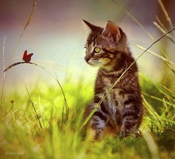 gatos-gatitos-crias-01