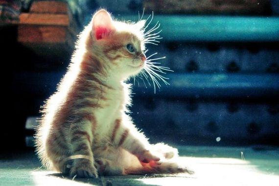 gatos-gatitos-crias-03