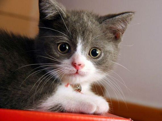 gatos-gatitos-crias-04