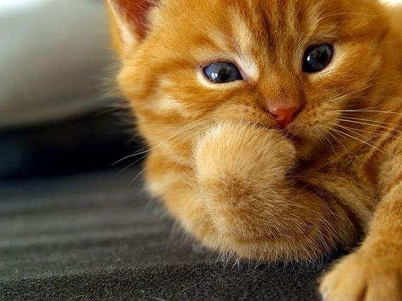 gatos-gatitos-crias-05