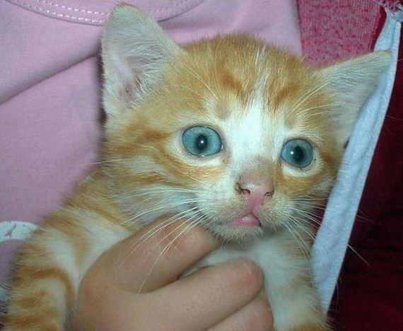 gatos-gatitos-crias-06
