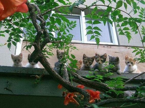 gatos-gatitos-crias-07