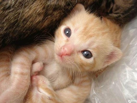 gatos-gatitos-crias-08
