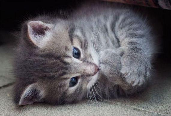 gatos-gatitos-crias-10