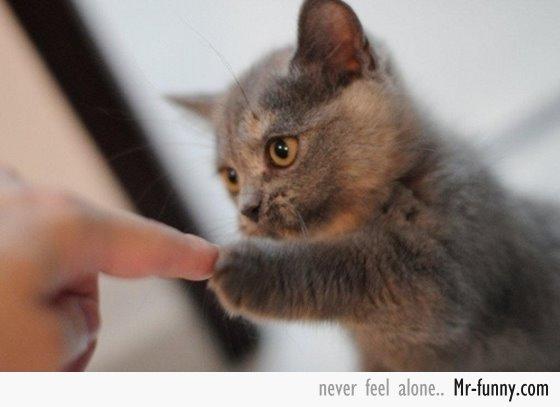 gatos-gatitos-crias-101