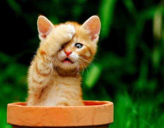 gatos-gatitos-crias-11